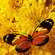 Butterfly Abstract Poster by Garry Gay