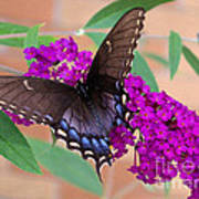 Butterfly And Friend Poster