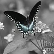 Butterfly Art Poster
