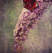 Butterfly Bush Poster