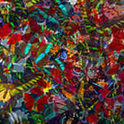 Butterfly Collage Red Poster