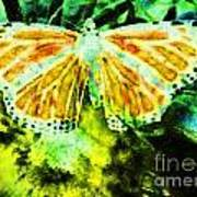 Butterfly Poster