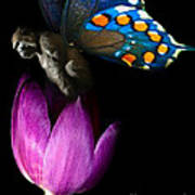 Butterfly-gorilla Poster by Soumya Bouchachi