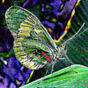 Butterfly Green Poster