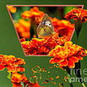 Butterfly In A Sea Of Orange Floral 02 Poster