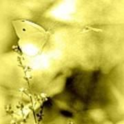 Butterfly In Flight - 2013-10-187 Poster