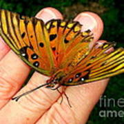 Butterfly Landing Poster
