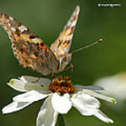 Butterfly Macro Photography Poster