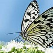 Butterfly On Blue Poster