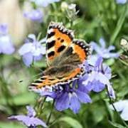 Butterfly On Blue Flower Poster