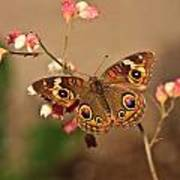 Butterfly On Pink Poster