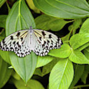 Butterfly Perching On Leaf In A Garden Poster