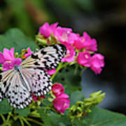 Butterfly Pollinating Flower Poster
