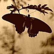 Butterfly Silhouette Poster