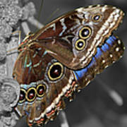 Butterfly Spot Color 1 Poster