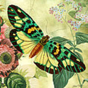 Butterfly Visions-a Poster