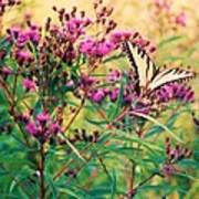 Butterfly Wildflower Poster