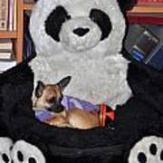 Button And The Panda Bear Poster