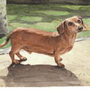 Buzz The Dachshund Watercolor Portrait Poster