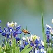 Buzzing The Bluebonnets 02 Poster