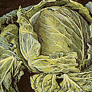 Cabbage Still Life Poster
