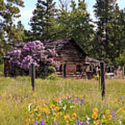 Cabin And Wildflowers Poster