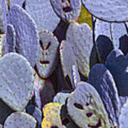 Cactus Faces Poster