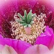 Cactus Flower 3 Poster