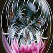 Cactus Flower Abstract Poster