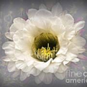 Cactus Bloom Poster