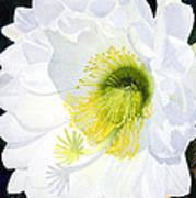 Cactus Flower II Poster