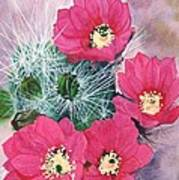 Cactus Flowers I Poster