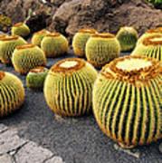 Cactus Garden On Lanzarote Poster