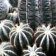 Cactus Glistening Poster