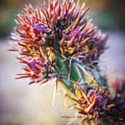 Cactus In Spring Bloom Poster