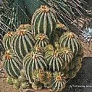 Cactus In The Garden Poster