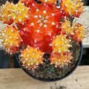 Cactus Orange Poster