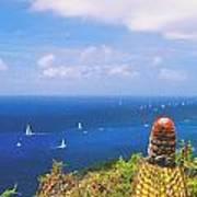 Cactus Overlooking Ocean Poster