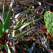Cactuscomp2 2009 Poster