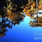 Caddo Lake Reflections Poster