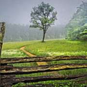 Cades Cove Misty Tree Poster