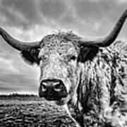 Cadzow White Cow Poster