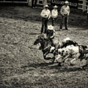 Calgary Stampede Black And White Poster
