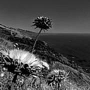 California - Big Sur 002 Poster