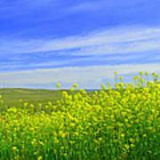 California In Spring Poster