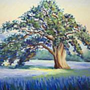 California Oak Poster