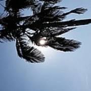 California Palm Poster