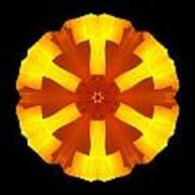 California Poppy Flower Mandala Poster by David J Bookbinder