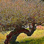 California Summer Oak Poster