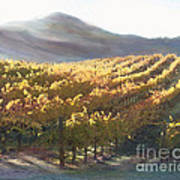 California Vineyard Series Vineyard In The Mist Poster by Artist and Photographer Laura Wrede